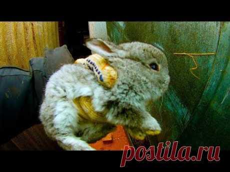 Вот  что с кроликами будет/ ч.1