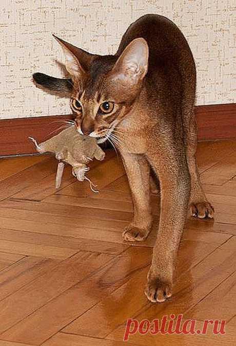 Десять игр для вашей кошки, чем занять кошку, настольный теннис кошки, игры кошек кошкой, шарики лабиринты бумажные пакеты лазерный фонарик коробки ленты коврики, игры кошки, про кошек котят животных