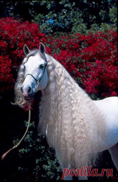 "eclektic: "" White horse """