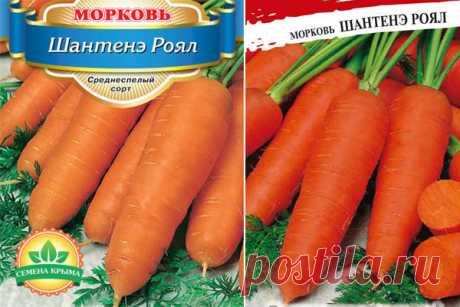 Морковь Шантанэ роял: описание сорта, фото, отзывы, характеристика, достоинства и недостатки, особенности выращивания, урожайность