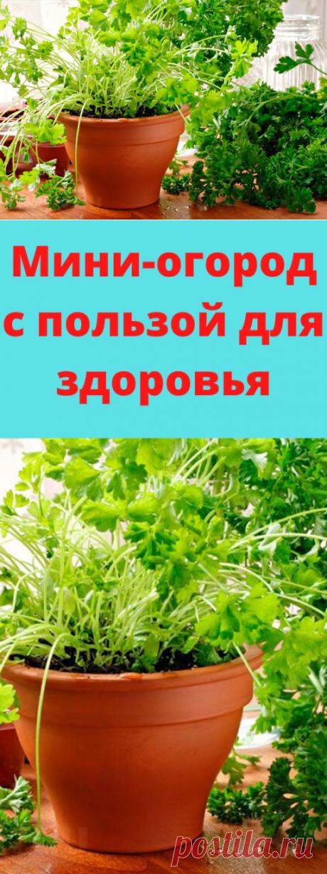 Мини-огород с пользой для здоровья