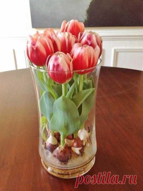 Выращивание тюльпанов в прозрачной вазе