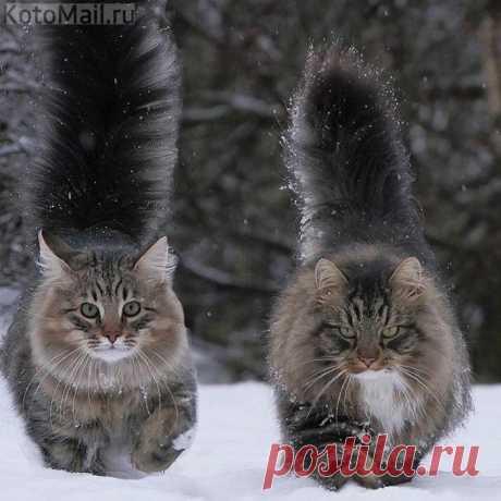 Сибиряки - это серьёзно!