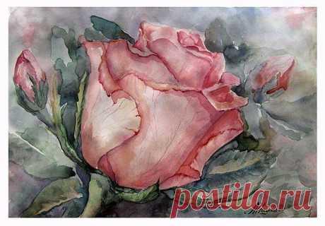 Как нарисовать розу акварелью — Сделай сам, идеи для творчества - DIY Ideas