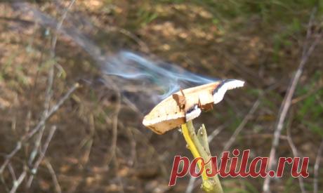 Лучшее средство от комаров. Должен знать каждый | Рыбалка XXI века | Яндекс Дзен