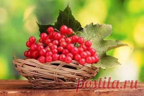 ЦЕЛЕБНЫЕ свойства КАЛИНЫ: простые рецепты.  Калина - одна из самых ПОЛЕЗНЫХ ягод в природе.  В калине всё ЦЕЛЕБНО: кора, веточки, цветы, ягоды и сушёные косточки.  Наши предки о лечебных свойствах калины, знали, что ее ягоды улучшают работу сердца, обладают успокаивающим действием.  Витамина С в калине в 1, 5 раза больше чем в лимоне. В ней есть железо, селен, йод, каротин, фосфор.  С мёдом калину назначали при простудных заболеваниях.  Чай из калины пили при гнойничковых заболеваниях кожи, п