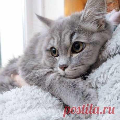 Коты – это ценнейший ресурс. Они уют вырабатывают!))