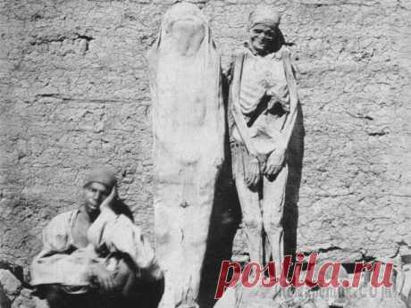 10 интересных фактов о мумиях Что первым приходит на ум, когда речь заходит о Древнем Египте? Пирамиды? Сфинксы? Боги с головами животных? Какие бы образы ни всплыли у вас в голове, среди них точно будет мумия. А что вообще мы зн...