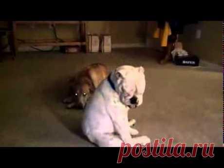 Пёс тащится от блюза\\\\\The dog likes blues