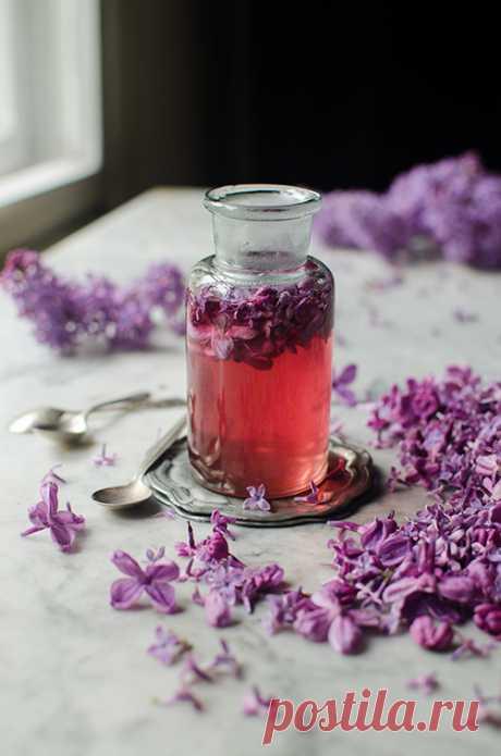Syrop z bzu lilaka Przepis na syrop z bzu lilaka, można go wykorzystać na wiele smacznych sposobów - do drinków, lemoniady, herbaty albo deserów.