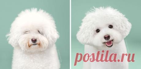 Оригинальные собачьи стрижки и собаки-модели до и после