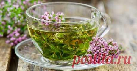 Чай с душицей – невероятно ароматный и вкусный успокаивающий чай