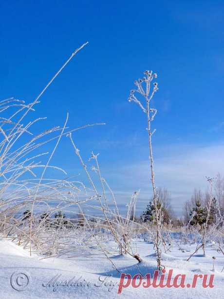 """Космодром """"Восточный"""" сухая трава,иней синее небо."""