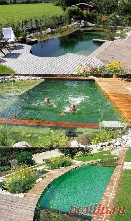 Как сделать пруд своими руками: 100 фото с инструкцией — Дом и Сад