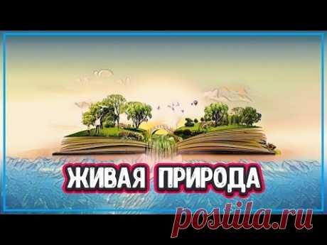 ЯВЛЕНИЯ ПРИРОДЫ - 7 УНИКАЛЬНЫХ ФЕНОМЕНОВ ПРИРОДЫ (явления живой природы) - YouTube