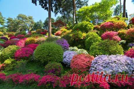 Королевский парк цветов Нидерланды