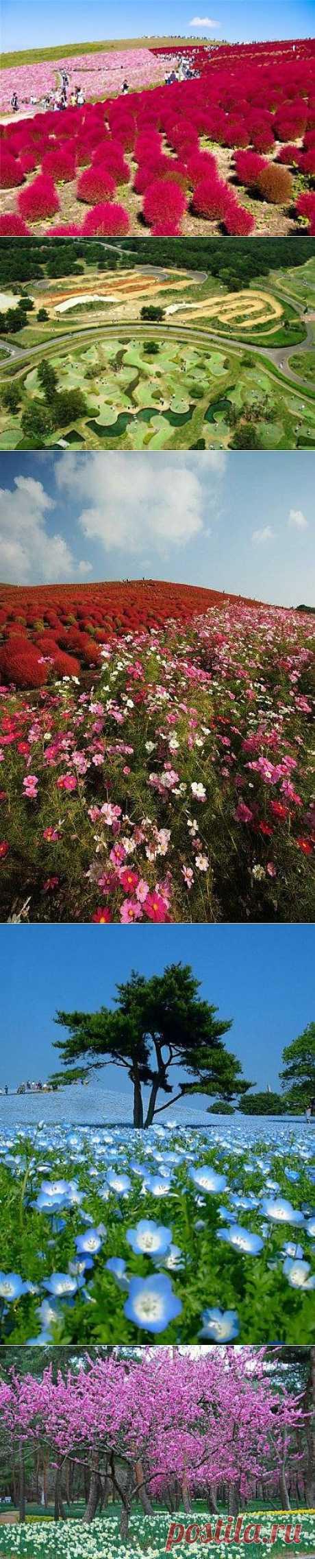 Вальс цветов Hitachi Seaside Park / Туристический спутник