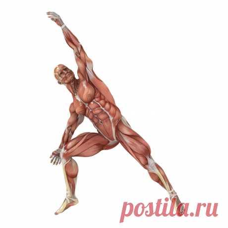 Упражнения на растяжку, которые подарят вам гибкость кошки за 4 недели Пластичность мышц гораздо сильнее влияет на наше самочувствие, чем мы думаем. Эксперты считают, что развитая гибкость помогает достичь лучших результатов на тренировках, повышает подвижность и координацию мышц, уменьшает мышечные боли и предотвращает травмы.