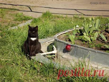 Коты-охранники | Кошки & Коты | Яндекс Дзен Не стоит сомневаться, что коты способны охранять свой дом. Если дом небольшой, его может охранять один кот. А если дом большой, это тоже не проблема. В большом доме всегда много котов. И если всем собраться и организовать дежурства. Бригадами. Допустим, по трое. То зачем вообще нужна собака? И корма на нее идет больше. И лишний шум от нее. Коты гораздо лучше...