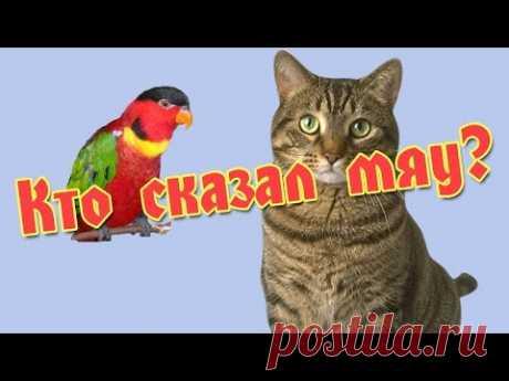 Мяукающий попугай Лори - YouTube