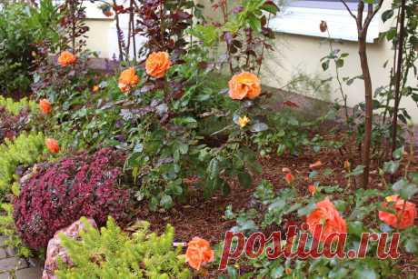 Что цветет в моем саду в середине сентября   Сад под Петербургом   Яндекс Дзен