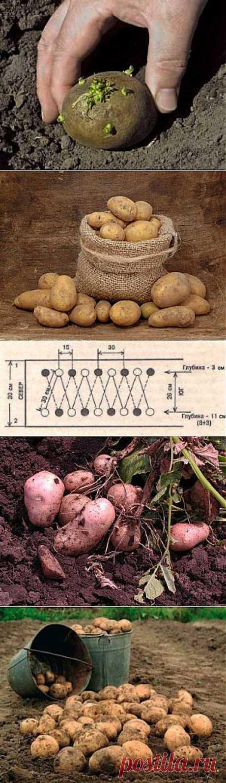 Все о картофеле-различные методики и способы.