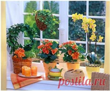 Как добиться цветения домашних растений