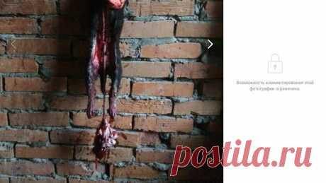 Петиция · Администрация городского округа города Хабаровск: Принять меры по наказанию Алины и Кристины ( в Хабаровской обл) за убийство животных · Change.org