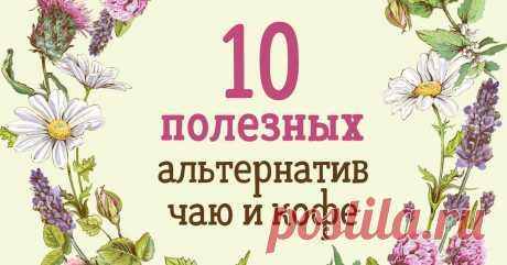 Что пить вместо чая и кофе Цветки, листья и стебли растений.