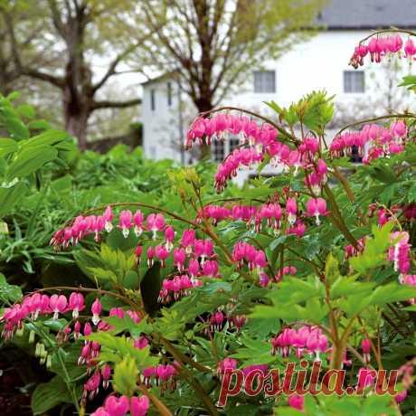 Лучшие растения для цветника на кислой почве. Описание, преимущества, фото — Ботаничка.ru