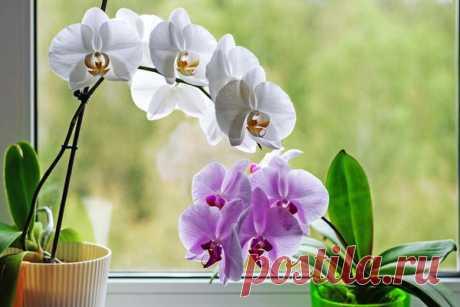 Почему не цветет фаленопсис: 6 причин и советы по уходу в домашних условиях