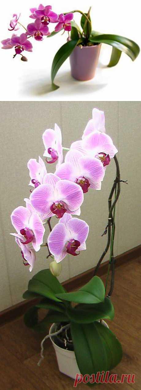 Как ухаживать за орхидеями в домашних условиях   Хитрости Жизни