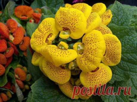Комнатный цветок с желтыми цветами: названия и особенности растений, какие виды могут цвести такими оттенками, тонкости ухода