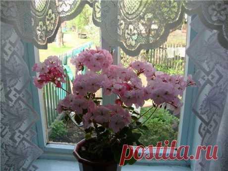 Комнатные растения для создания приятного аромата в доме   Мой дом