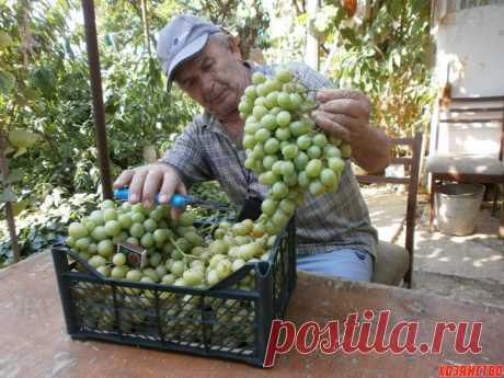 Ликбез для начинающих виноградарей