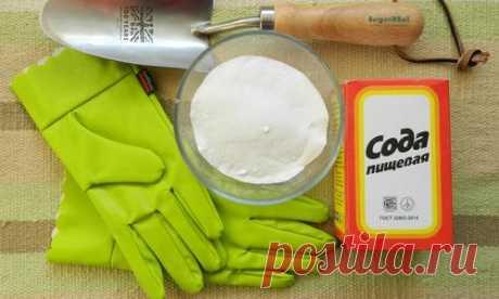 La sosa alimenticia para el jardín y la huerta: 22 modos de la aplicación en la parte