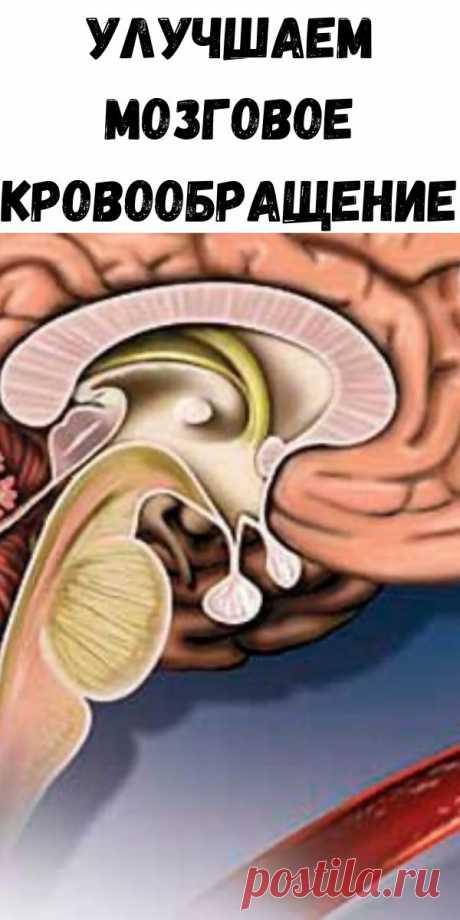 Улучшаем мозговое кровообращение - Советы на каждый день
