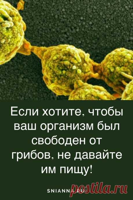 Если хотите, чтобы Ваш организм был свободен от грибов, не давайте им пищу!   Если мы хотим, чтобы наш организм был свободен от грибов, единственное, что мы можем, это не давать ему пищу.  ➡️Кликайте на фото, чтобы прочитать статью полностью
