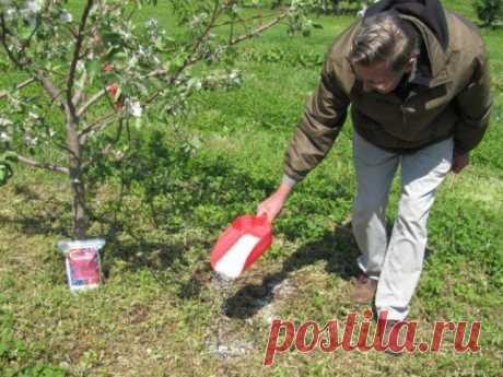 Как и чем удобрять деревья в саду | Уход за садом (Огород.ru)