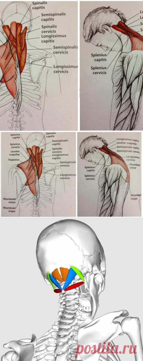 La gimnasia vascular cura los dolores de cabeza