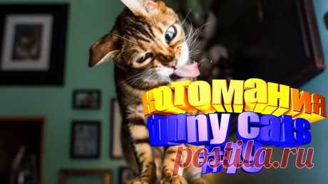 видео коты смешные, видео смешных котов, кот смешной видео, кот видео смешное, видео для котов, том кот видео, коты приколы видео, видео про кота, видео о котах, смешные животные, видео смешных животных, смешное про животных, видео смешное животных, видео коте, приколы котов, приколы для котов, приколы о кошках, коты и приколы, кошки смешные видео, смешные кошки видео, видео кошек смешное, смешных кошек, кошка видео смешное, смешно кошки, видео кошек смешные, кошек смешные, видео кошки