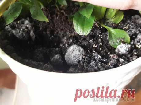 Почему в цветочном горшке белый налет и что с этим делать Что главное при выращивании комнатных растений? Конечно, хороший грунт, ведь именно он дает нашим цветочкам питательные вещества, благодаря которым они активно растут и радуют своим цветением. Некачес...
