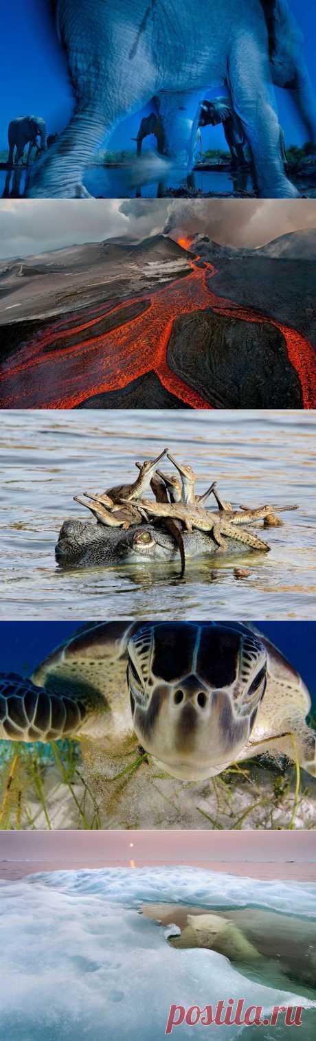 Победители престижного фотоконкурса Wildlife Photographer of the Year | В мире интересного