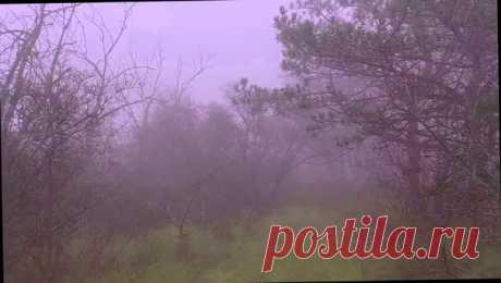 Сиреневый туман, над нами проплывает... зимой, если тоскливо, можно в Париж махнуть...