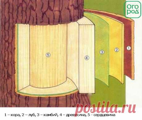 As it is correct to impart an apple-tree in the fall | In a garden (Огород.ru)