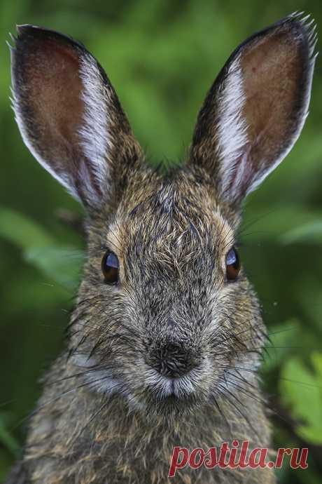 Загадки про зайца с ответами – 45 самых лучших загадок – ladyvi.ru