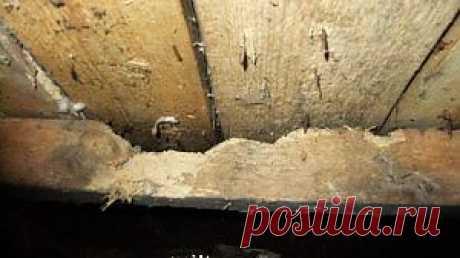 Скрипит деревянный пол