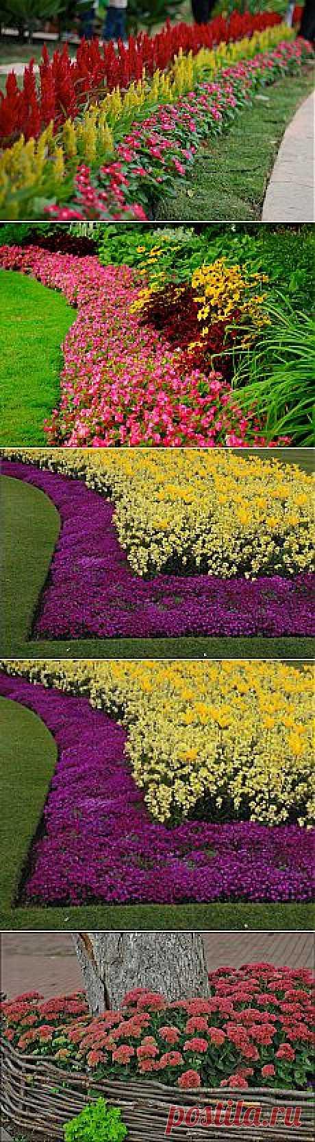 сообщение Valya6827 : Мой любимый сад - Цветочный бордюр. (20:10 08-04-2014) [4417122/320436603] - ue900@mail.ru - Почта Mail.Ru