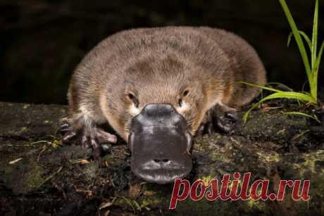 Как выглядят самые странные животные в мире и почему они стали такими? | Рекомендательная система Пульс Mail.ru