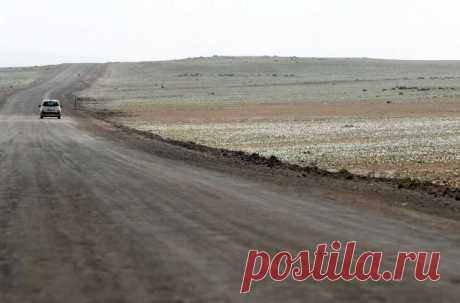 В Чили расцвела самая засушливая пустыня в мире / Моя Планета